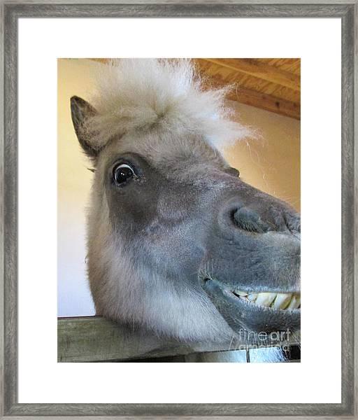 Horse 11 Framed Print
