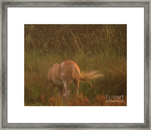 Horse 4 Framed Print