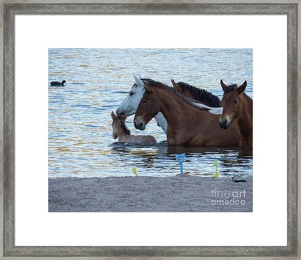 Horse 6 Framed Print