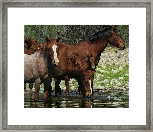 Horse 7 Framed Print