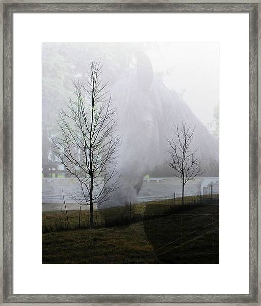 Horse And Field Framed Print by Cathie Tyler