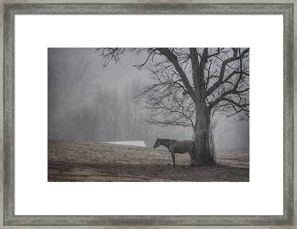 Horse And Tree Framed Print