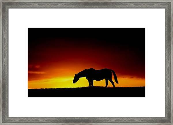 Horse At Sunset Framed Print