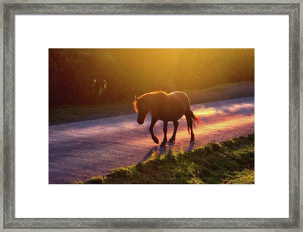 Horse Crossing The Road At Sunset Framed Print