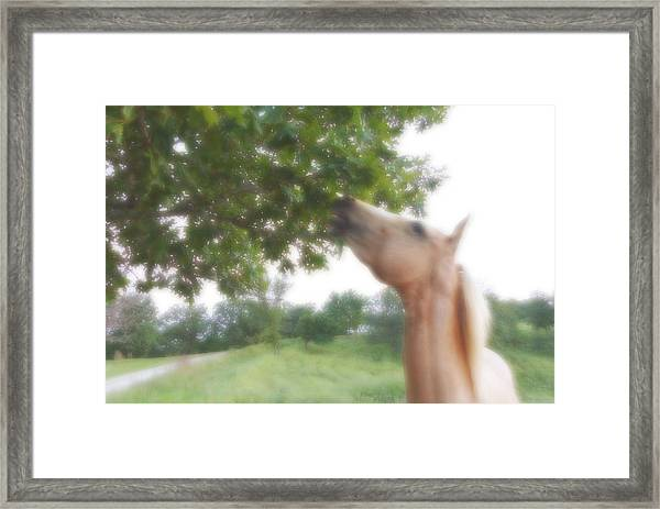 Horse Grazes In A Tree Framed Print