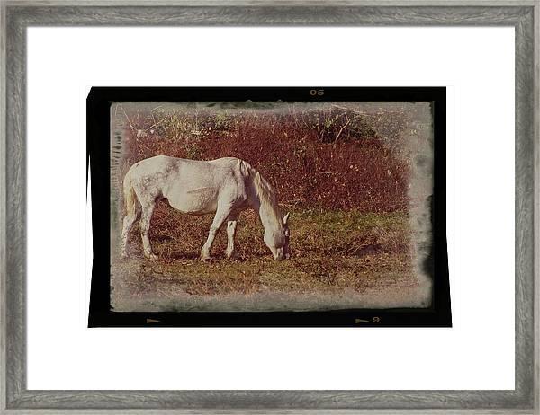 Horse Grazing Framed Print