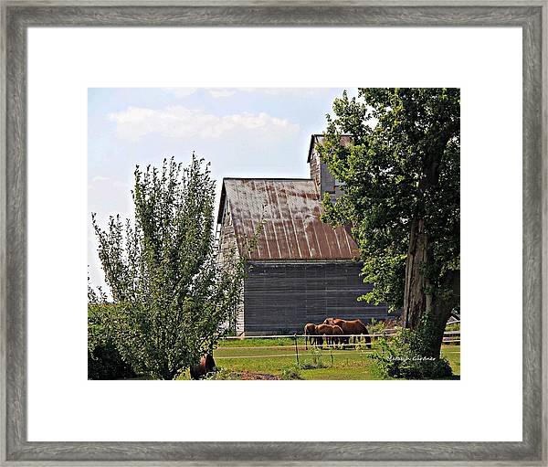 Horse Haven Framed Print