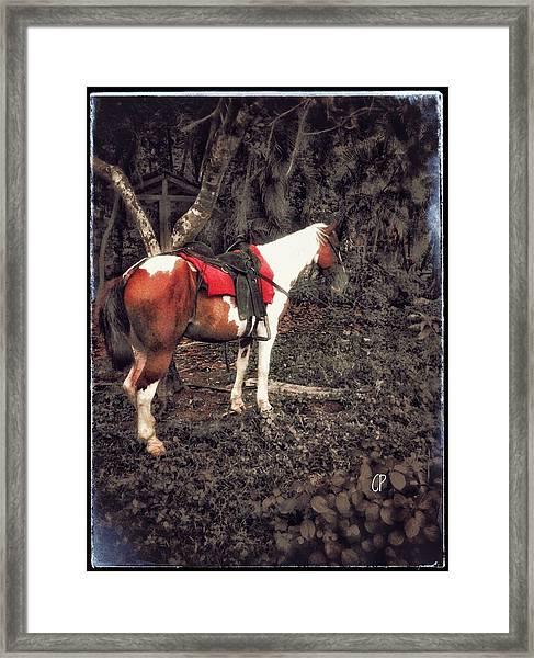 Horse In Red Framed Print