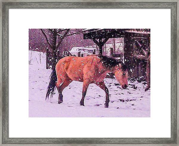 Horse In Snow Framed Print