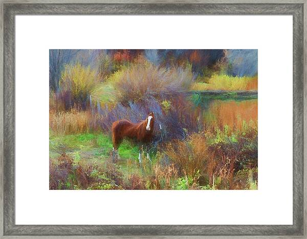 Horse Of Many Colors Framed Print