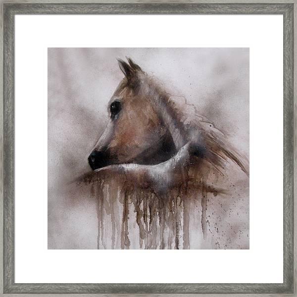 Horse Shy Framed Print