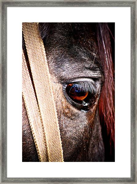 Horse Tears Framed Print