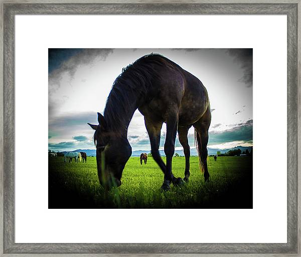 Horse Time Framed Print