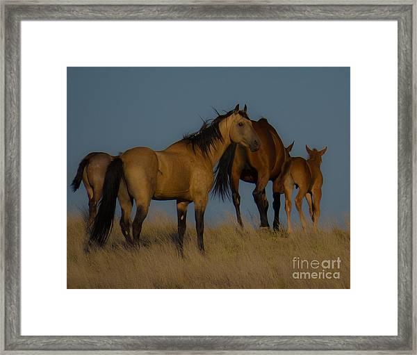 Horses 1 Framed Print