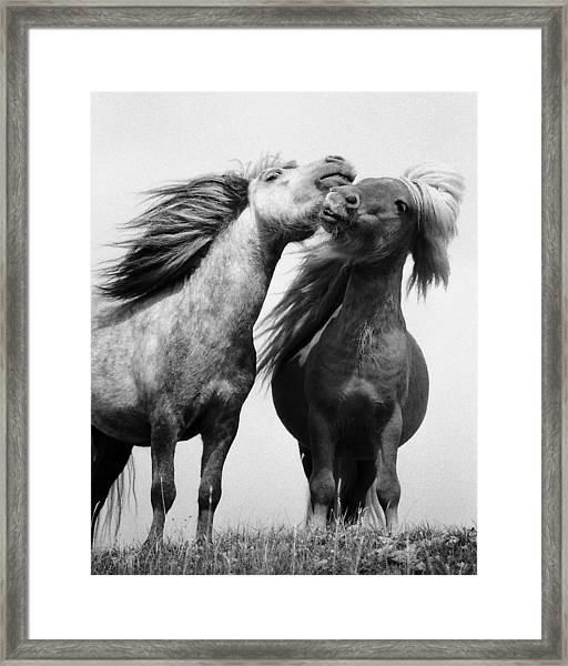 Horses 5 Framed Print by Stephen Harris