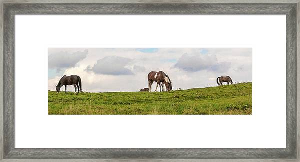 Framed Print featuring the photograph Horses And Clouds by D K Wall