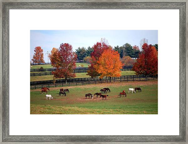 Horses Grazing In The Fall Framed Print