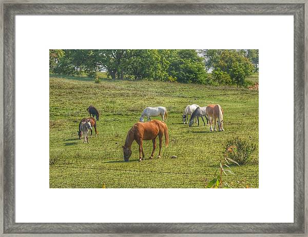 1003 - Horses In A Pasture I Framed Print
