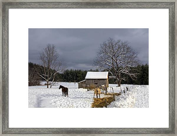 Horses In Snow Framed Print