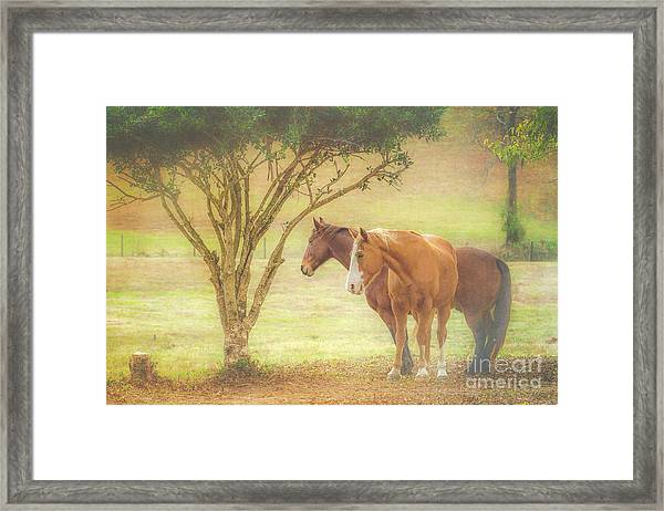 Horses In The Meadow Framed Print