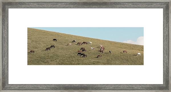 Framed Print featuring the photograph Horses On The Hill by D K Wall