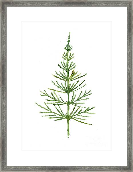 Horsetail Watercolor Green Poster Framed Print