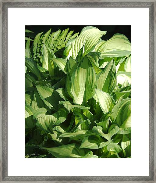Framed Print featuring the photograph Hosta 5416 by Brian Gryphon