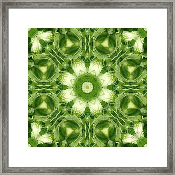 Hosta 5416k8 Framed Print
