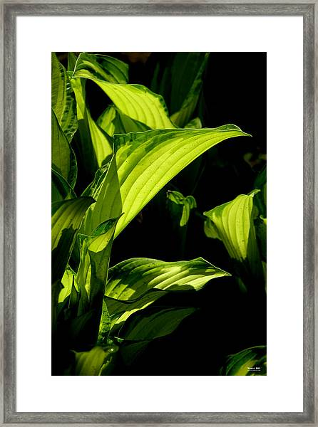 Framed Print featuring the photograph Hosta 561 by Brian Gryphon