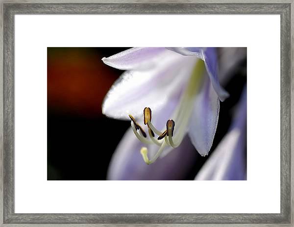 Hosta Flower Framed Print