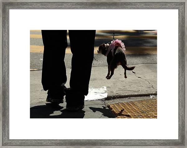 Hot Dog Framed Print