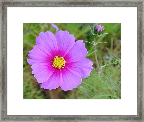 Framed Print featuring the photograph Hot Pink Flower by Joseph R Luciano