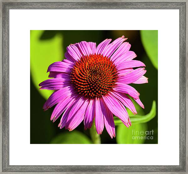 Hot Pink Flower Framed Print