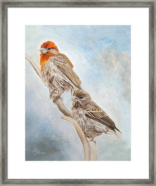 House Finch Couple Framed Print