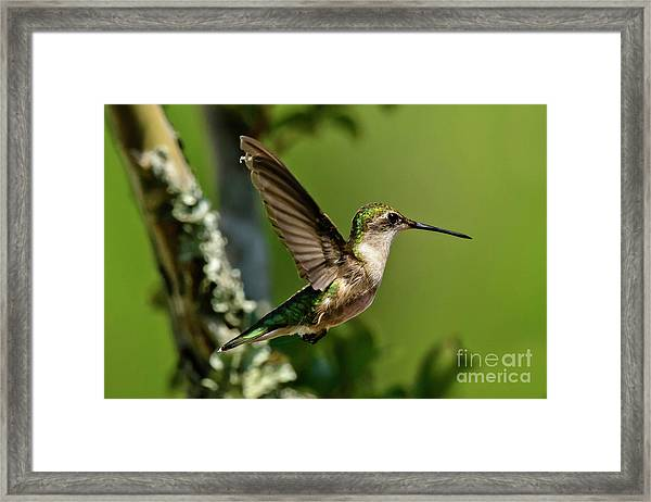 Framed Print featuring the photograph Hover by DJA Images