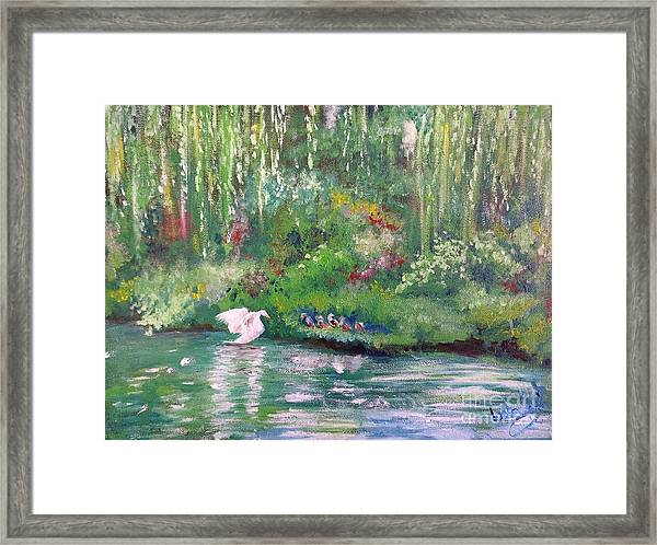 How To Swan Framed Print