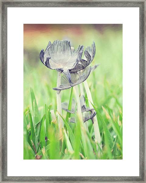 Huddled Framed Print