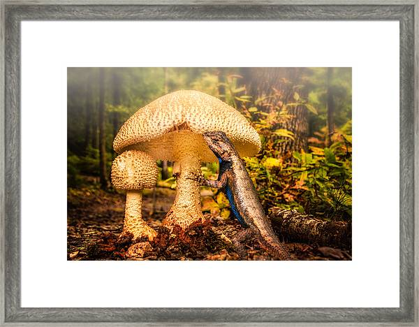 Framed Print featuring the photograph Hugo Under The Toadstool by Claudia Abbott