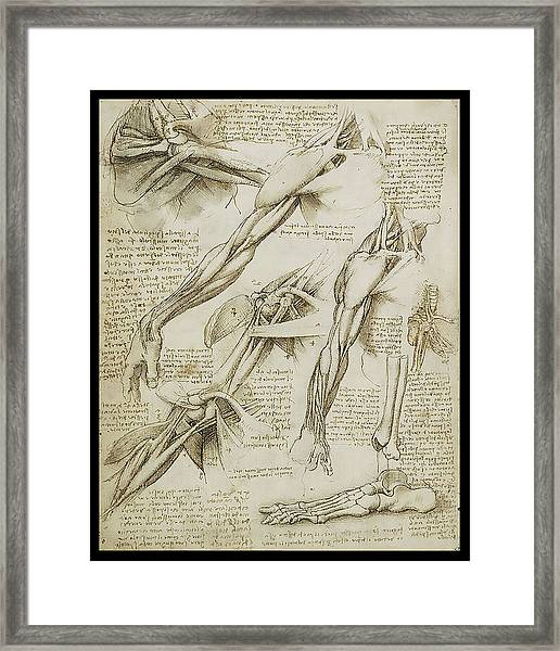 Human Arm Study Framed Print