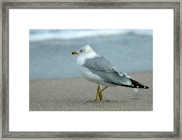 Humbly Waiting Framed Print by Teresa Blanton