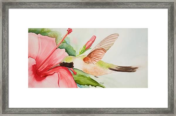 Hummin Framed Print