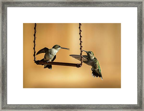 Humming Birds Framed Print