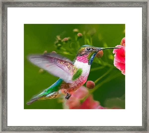 Hummingbird And Flower Painting Framed Print
