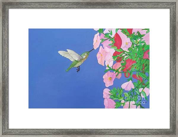 Hummingbird And Petunias Framed Print