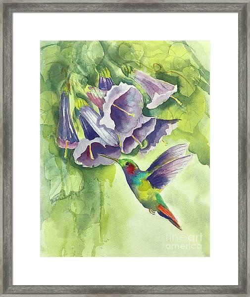 Hummingbird And Trumpets Framed Print
