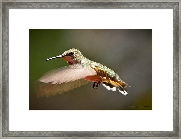 Hummingbird Facing Left Framed Print
