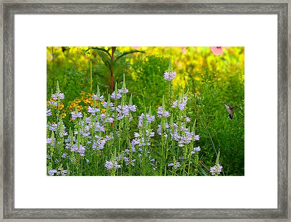 Framed Print featuring the photograph Hummingbird Heaven by William Jobes