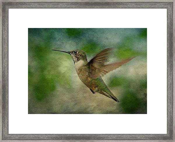 Hummingbird In Flight II Framed Print
