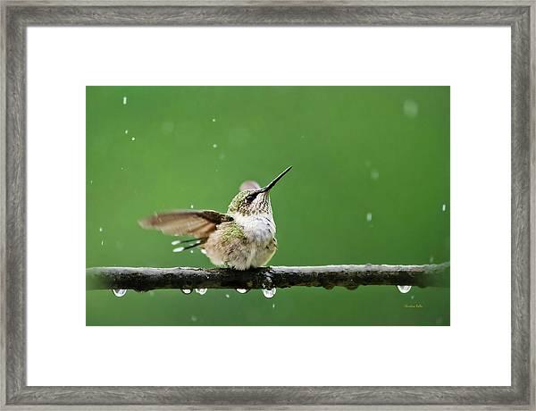 Hummingbird In The Rain Framed Print