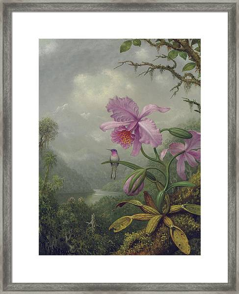 Hummingbird Perched On An Orchid Plant Framed Print